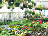 plant sale in greenhouse